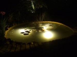 Wildlife pond at night