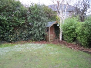 Old shed and Silver birch