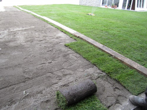Laying New Lawn