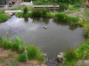 Middle pond and child proof fence
