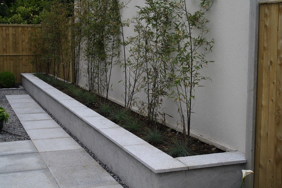 Raised bed & seat, black stemmed bamboo hedge