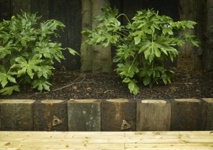 Fatsia Japonica & Raised Sleeper Bed