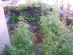 Bamboo and Ferns in Booterstown, Dublin